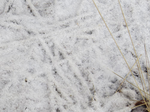 snow on grass