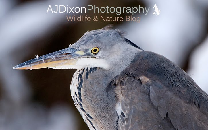 A.J. Dixon Wildlife and Nature