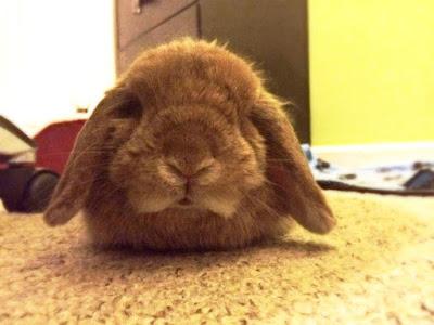 Rabbit Subscription Box