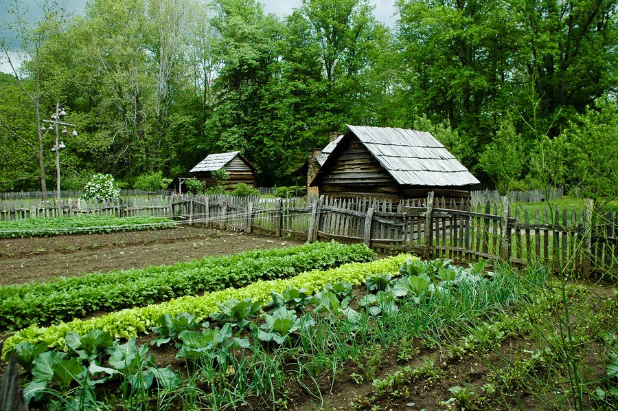Organic Garden, Organic Holticulture, Organic Plants, Organic Food,  Gardening
