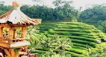 Bali Ubud Kintamani Tour