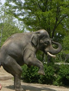 elephant, zoo activities for preschool