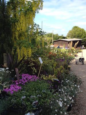 Blackbrooks Garden Centre Cafe