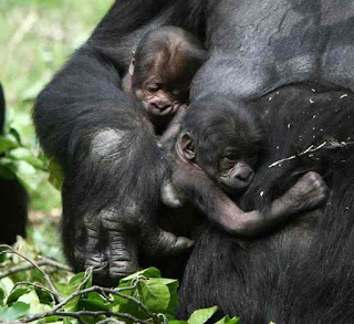Kwita Izina | Rwanda Gorilla Naming Ceremony