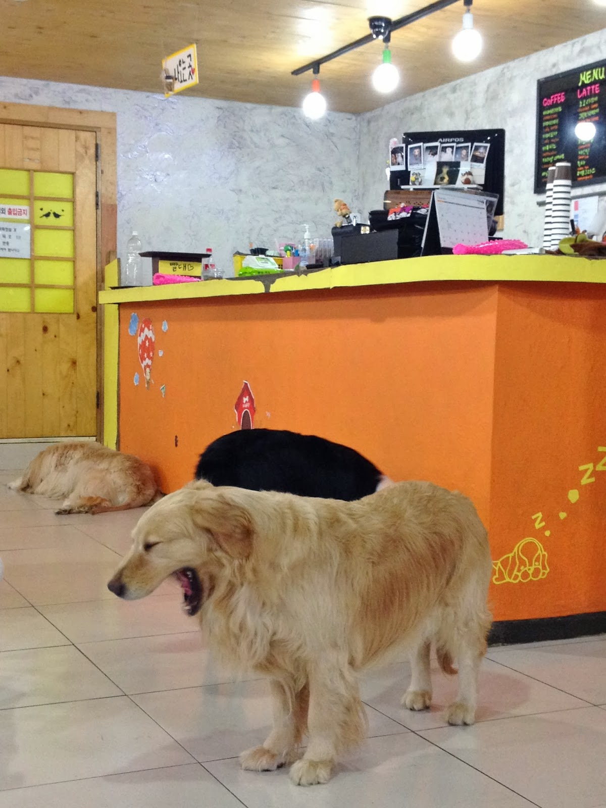 Dog Cafe in Seoul