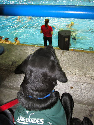 Black lab puppy Romero is lying on the floor of the stands at a pool, with his chin resting on the ledge as he watches the swimmers. He is wearing his green Future Dog Guide jacket. There is a blue bar several inches above Romero's head. In the pool below, several teams of synchronized swimmers are practicing. A coach wearing a red shirt is standing on the pool deck.