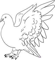 Pigeon Clip Art :: Line Drawing :: Outline
