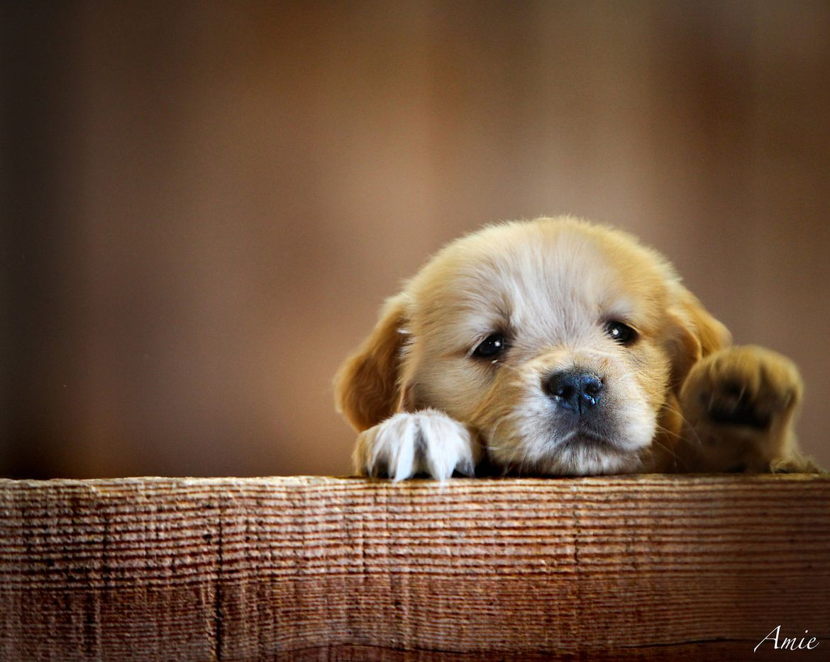 8. I want a puppy!