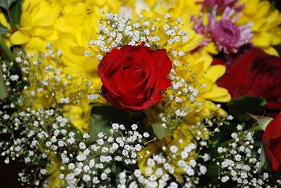 Foto bunte Blumen