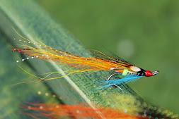 Tronach Shrimp