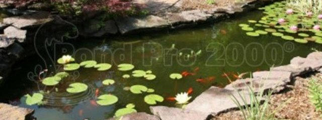 Pond Pro