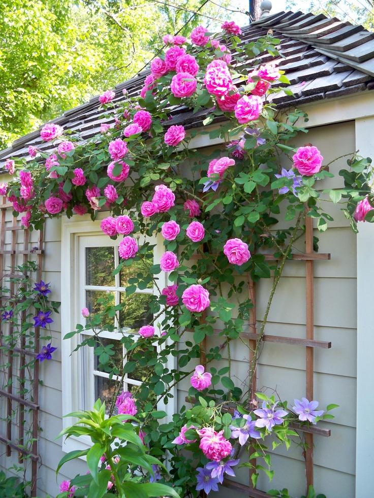 Dep sito santa mariah gertrude jekyll dama dos jardins - Front de liberation des nains de jardin ...