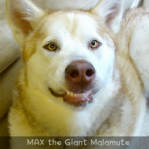 Follow MAX on Facebook
