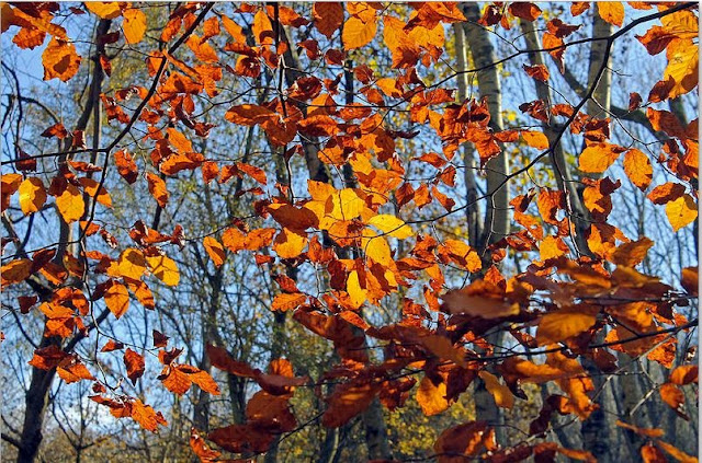 Buy Wall Art of Autumn Leaves