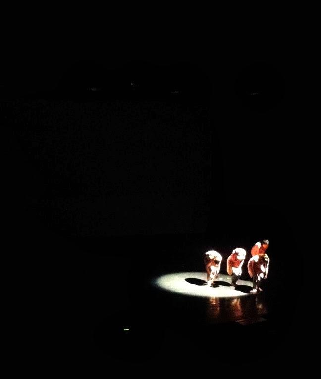 Spotlight on Orchasis