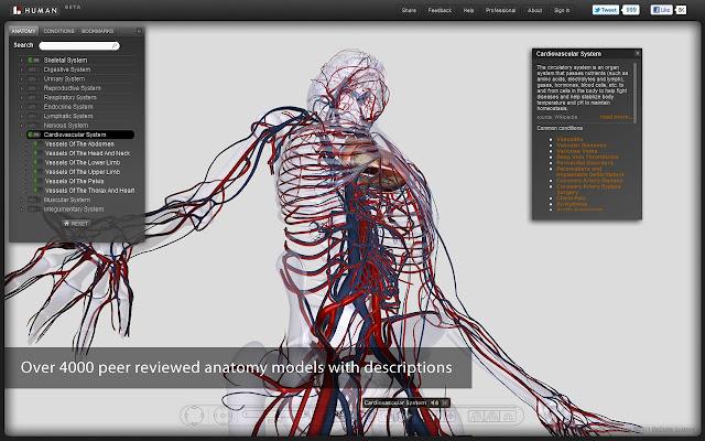 digital human anatomy at its best siddhadreams