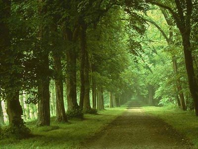 O Bosque Bosques1