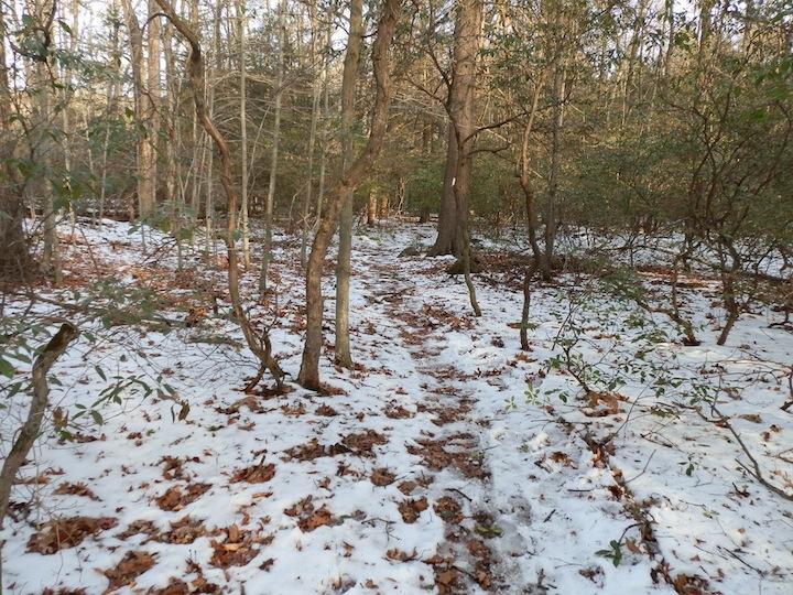 Snow on the White Trail