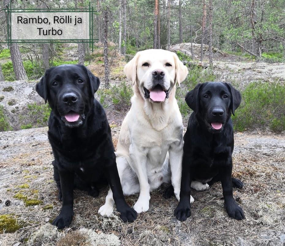 Rambo, Rölli & Turbo