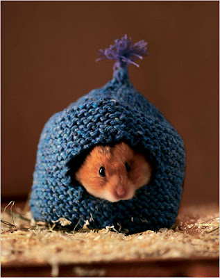 Knitting Pattern For Hamster Jumper : The Knitting Needle and the Damage Done: Scritchys To Do List and Other ...