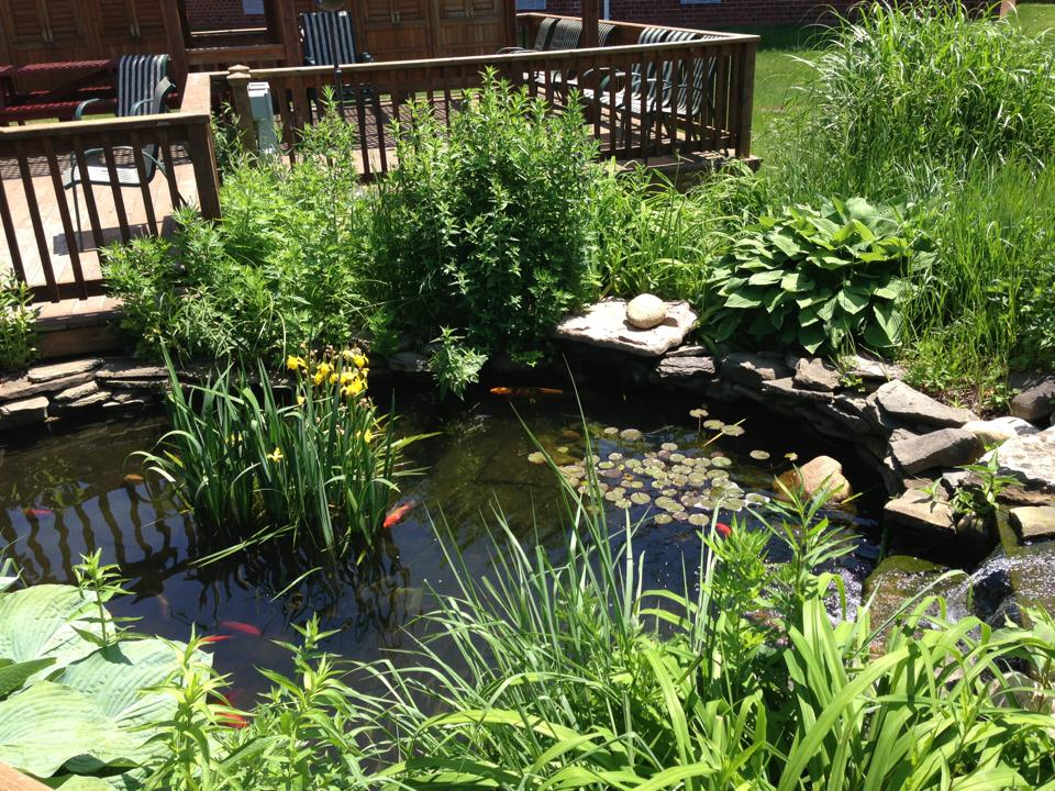 The impolitic your moment of zen for Virtual koi fish pond