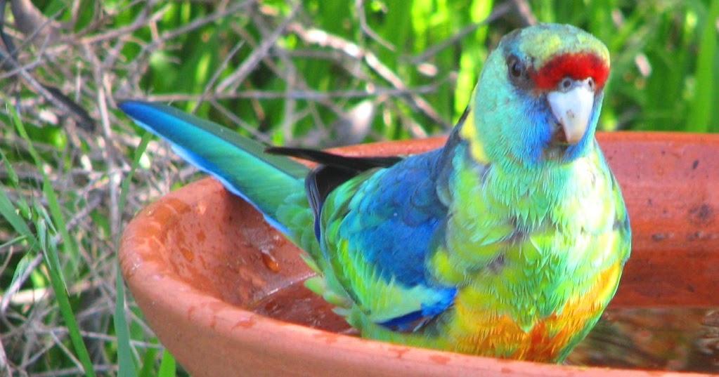 Nourrir les oiseaux dans votre jardin fr blog - Nourrir un herisson dans son jardin ...