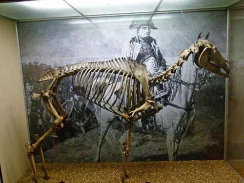 Napoleon's horse, Marengo, Waterloo, National Army Museum, Britain at war