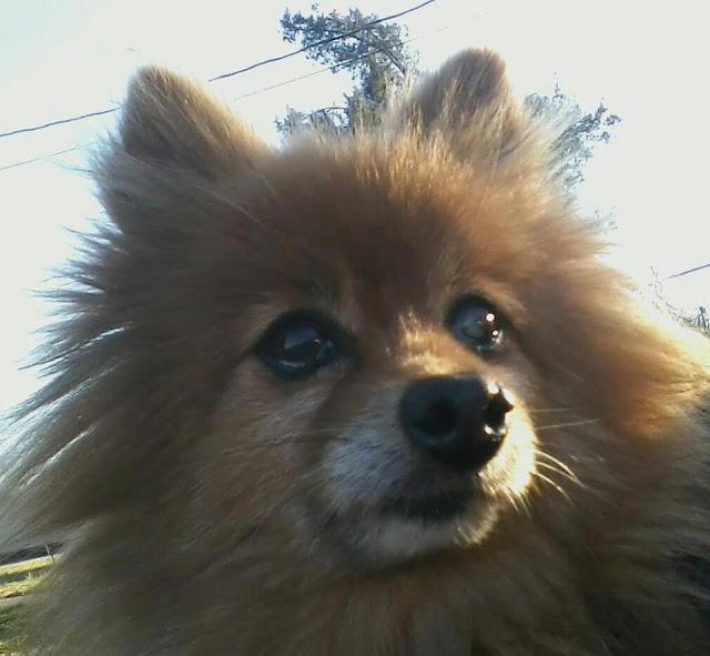 animal rescue, dog, dog rescue, animal adoption