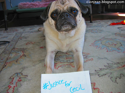 Pug with sign that says #JusticeforCecil