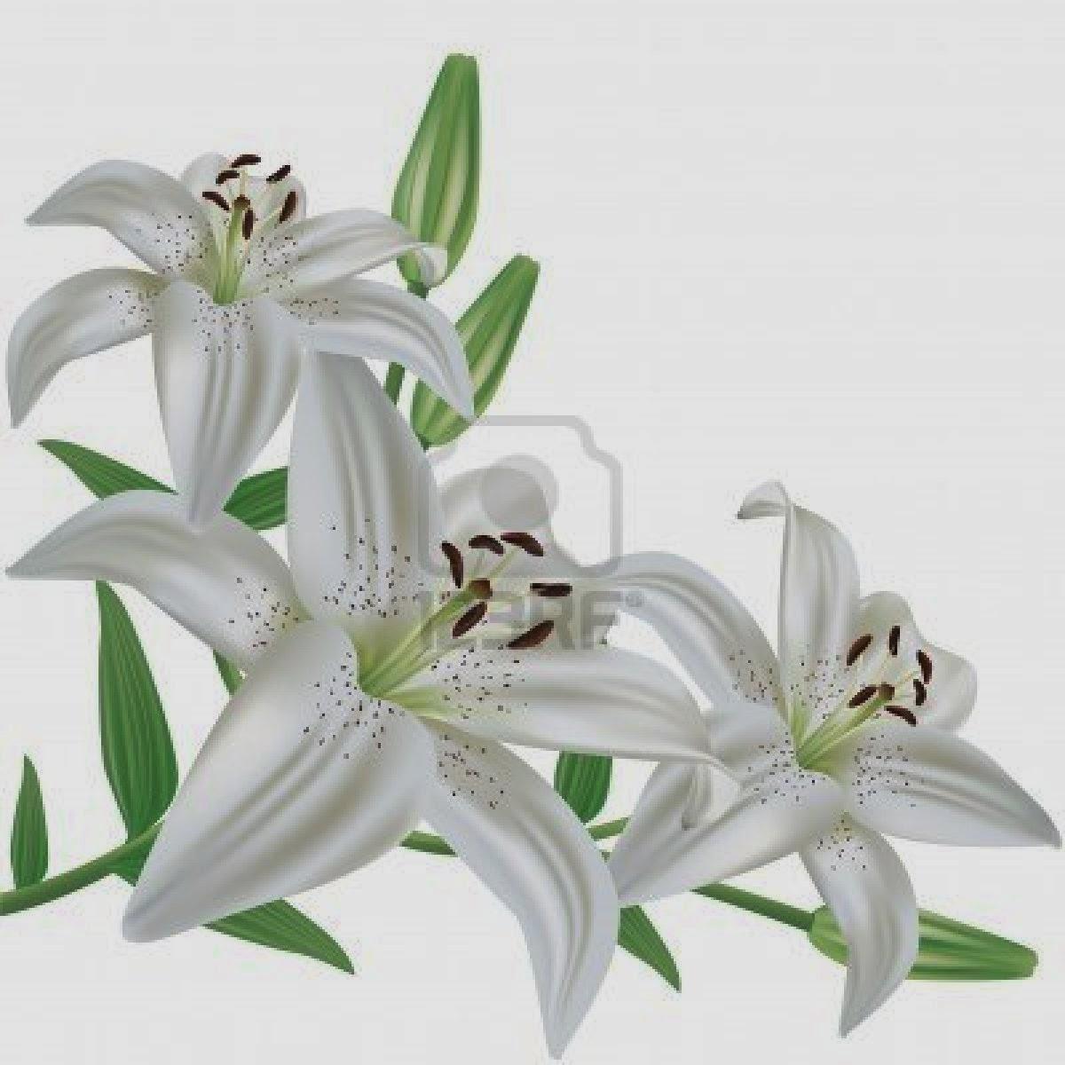 White Lily Flower Bouquethttprefreshrosespot