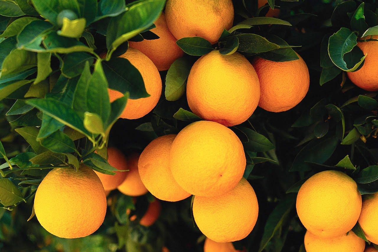 Wallpaper fruits free download - Sweet Orange Fruit Wallpapers Themes Images Free Download