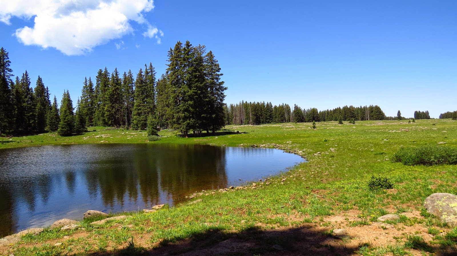 One of the many hundreds of lakes on Grand Mesa, Colorado