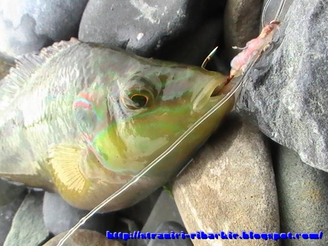 сколько морозить рыбу от паразитов