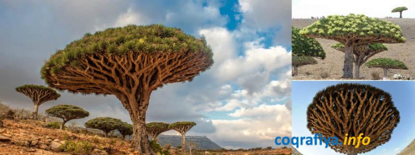 Qanlı Ağac