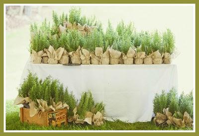 Today and forever bomboniere aromatiche - Porta piante aromatiche ...