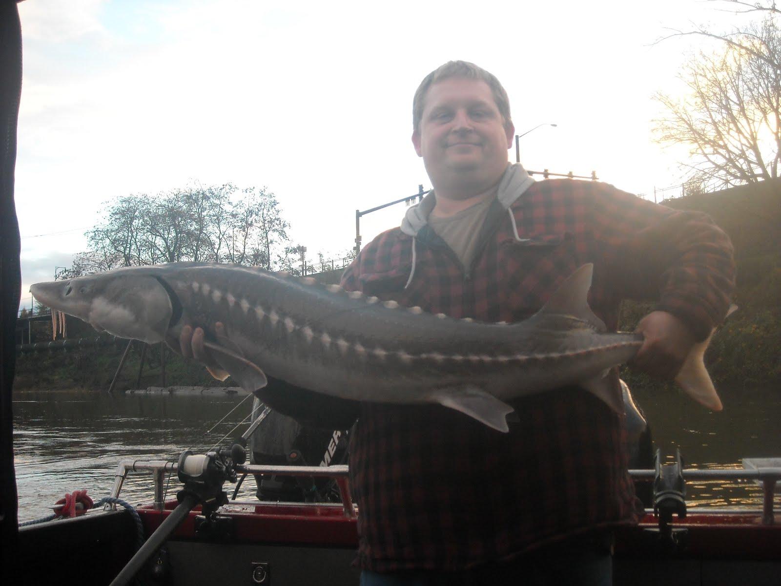 Sturgeon fishing fall sturgeon report for Sturgeon fishing report