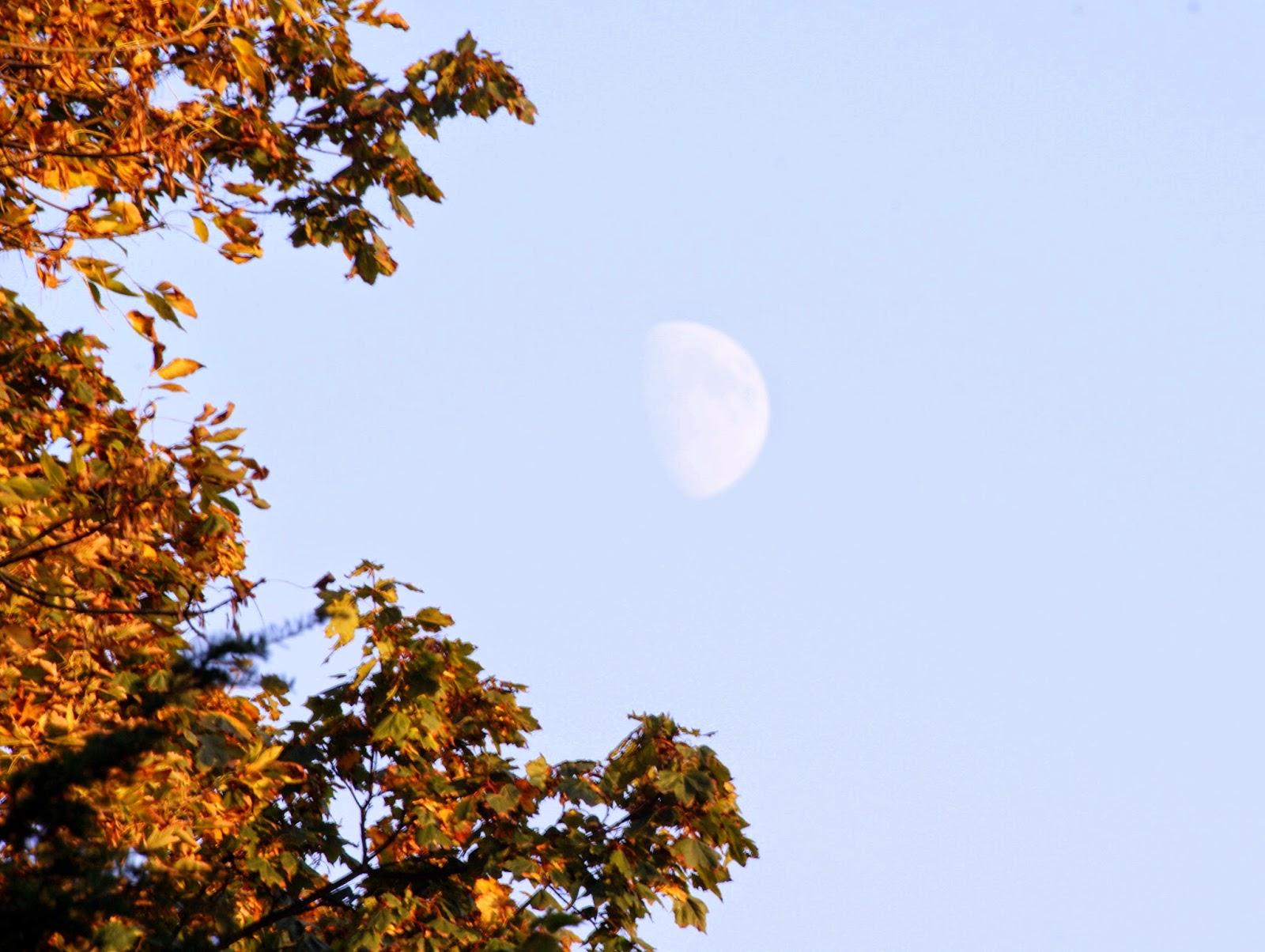 księżyc w dzień moon autumn leafs