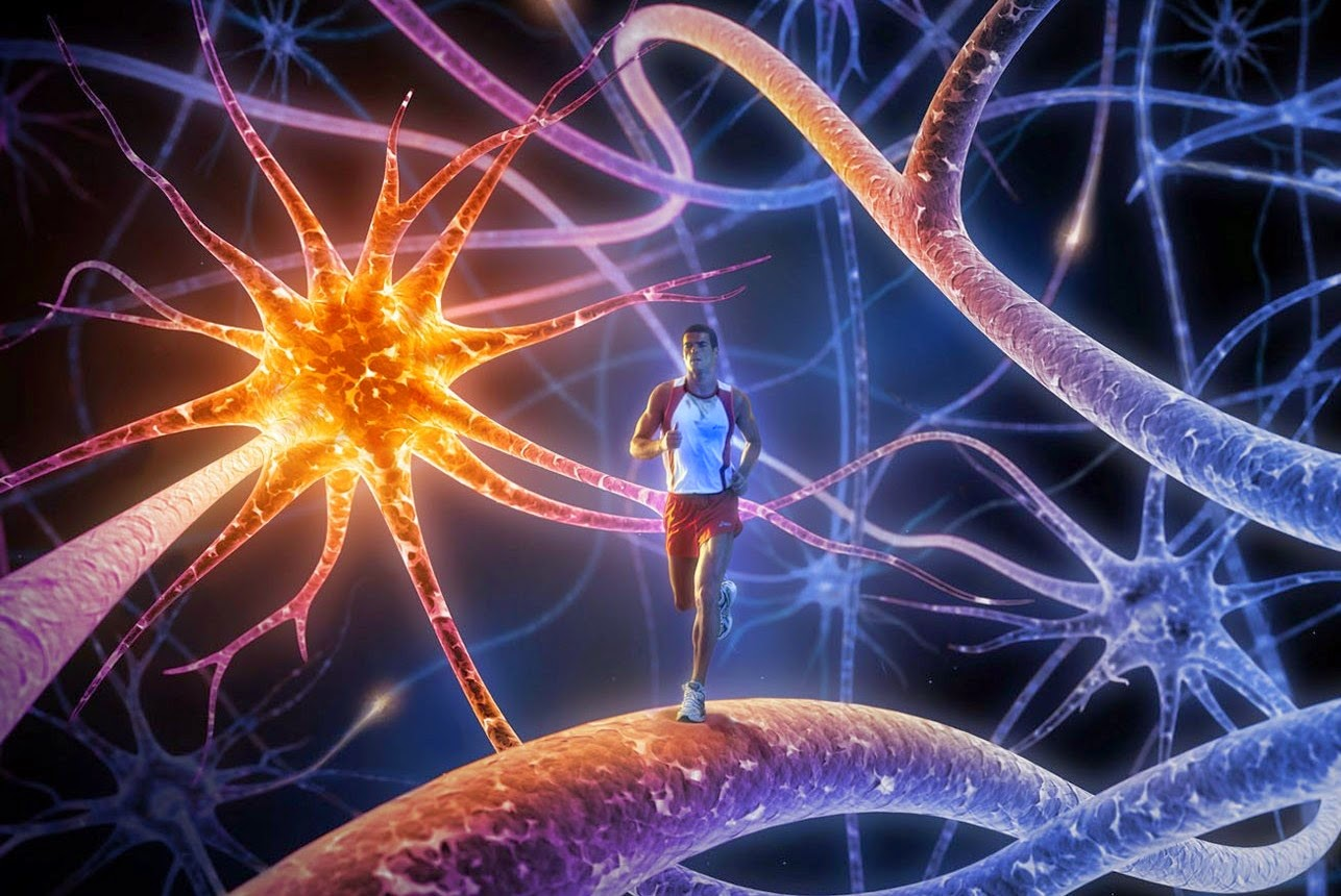 Neurons and Exercise