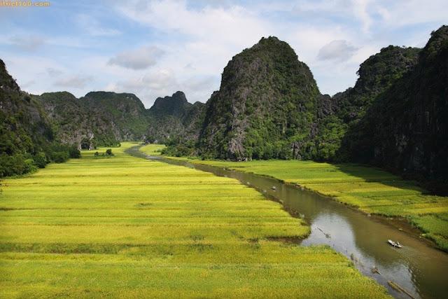 Hình ảnh đẹp về Ninh Bình - danh lam thắng cảnh, Tam Cốc mùa lúa chín