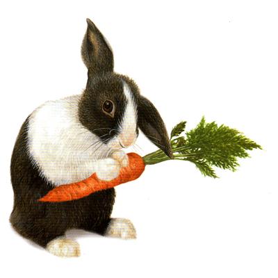 rabbit,bunny,animalia,chordata,vertebrata,,mammalia,lagomorpha