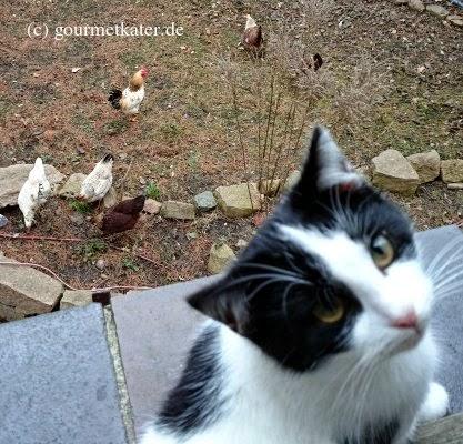 Katze und Hühner