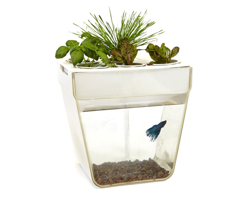 aquafarm a self cleaning fish tank sofraiche