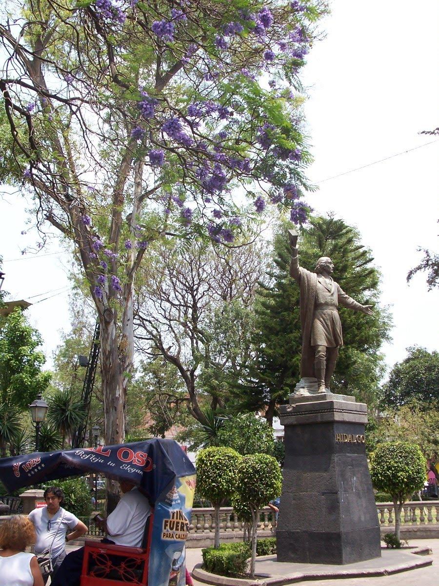 Jacaran df jardin hidalgo azcapotzalco for Jardin hidalgo