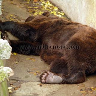 стъпка следа меча мечка зоокът варна