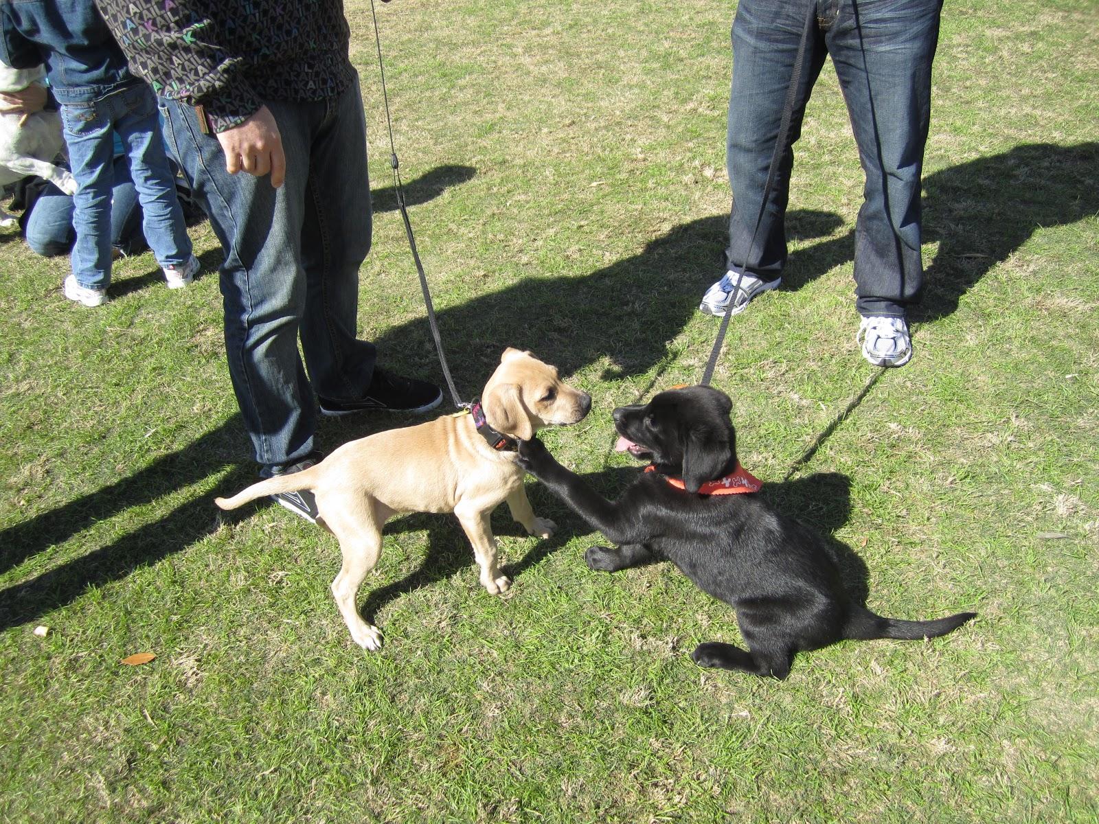 Dog Training Lake Eola