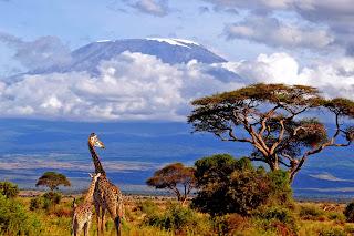 Kilimanjaro bjerget, Tanzania