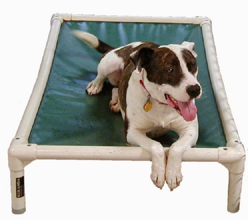 Kong Beds For Dogs Reviews