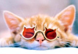 funny cute cat pussy kotka macka kocka gato katze macska huisdieren animaux de compagnie Haustiere animales domesticos husdjur Evcil Hayvan anifeiliaid anwes domace zvali augintiniai peatai bet kay lemmikit mga alagang hayop domaci