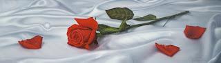 Flores Rojas Oleos