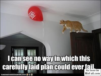 funny cat pics - lolcat